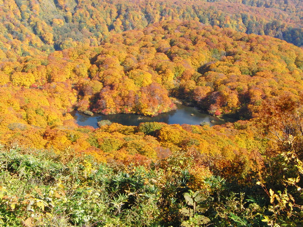 Tsuruma Pond3